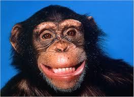 Arrogance Monkey's Uncle