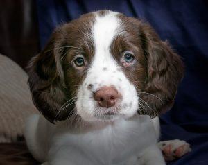Socrates, Plato, and puppies